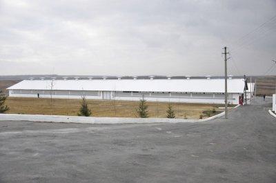 На Буковине открыли молочный комплекс за 30 миллионов
