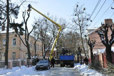 На улице Буковинской срезают старые клены