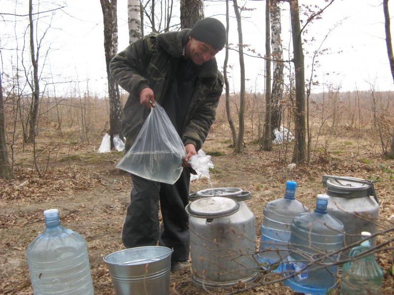 Как сделать берёзовый сок резким