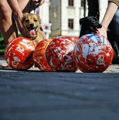 Акция защитников животных в Черновцах закончилась дракой