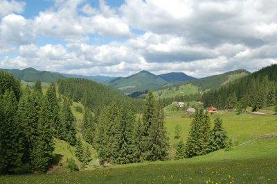 В Путильщини хотят забрать часть лесов