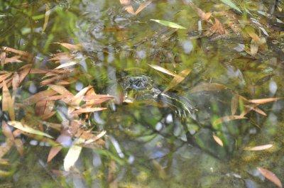 В Черновцах в Ботаническом саду с  появились черепахи