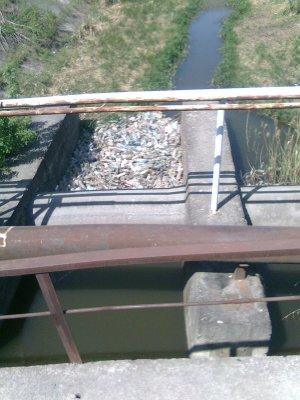 Реки в Черновцах имеют «плотины» из пластика