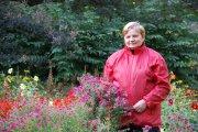 В Ботсаду цветут десятки сортов георгинов и хризантем
