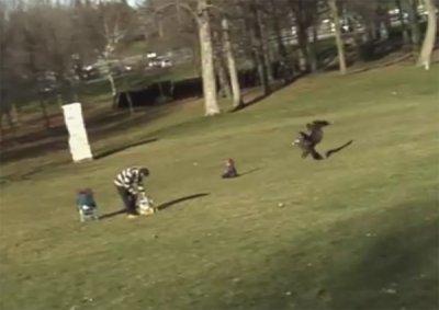 В Монреале огромный орел едва не украл ребенка (видео)