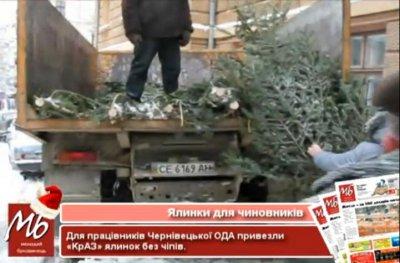 """Чиновникам Черновицкой ОГА привезли  """"левые """" елки"""