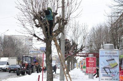 В Черновцах обрезают деревья женщины - мужчины не хотят