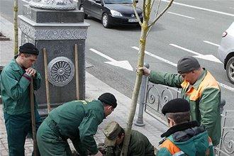 Киевские власти признали факт мошенничества с каштанами на Крещатике