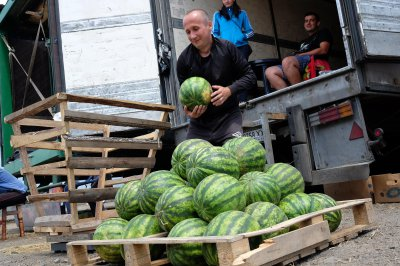 In Chernivtsi , the first watermelon and melon ( PHOTOS)