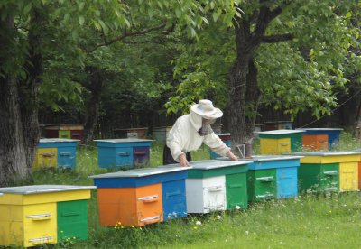 From forest apiaries Storozhynetsk forestry collected nearly a ton of honey