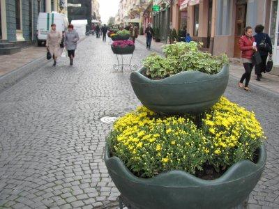 City Day in Chernivtsi put a thousand chrysanthemums