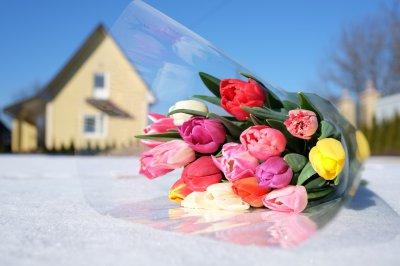 100 тисяч тюльпанів квітнуть посеред зими у садибі буковинця (ФОТО)
