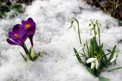 Похолодання відступає, на Буковину йде весна