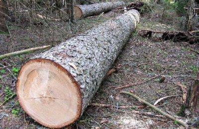 На Буковині група чиновників попалися на хабарі за ліс