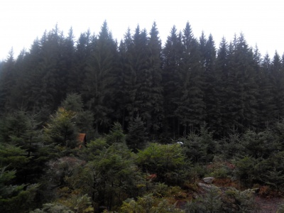 Лісгоспи Буковини відкрили свій туристичний маршрут