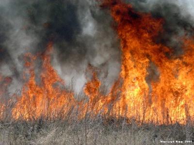 Рятувальники закликають чернівчан не палити суху траву