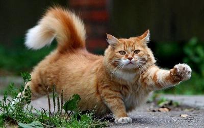 Кішки лікують головний біль та серце