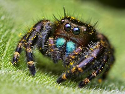 Отрута павуків – ліки від головного болю