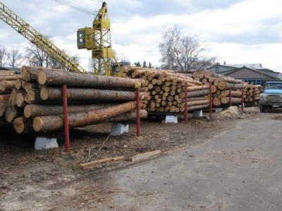 Частина підприємців бойкотували аукціон з продажу деревини