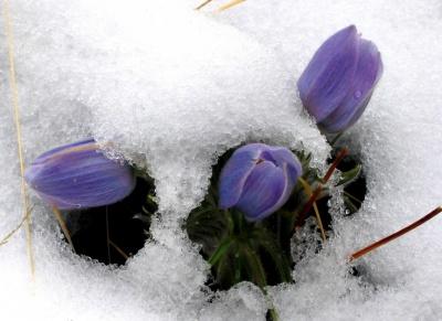 У вихідні на Буковині буде дощ з мокрим снігом