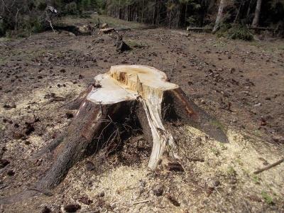 Неравнодушные буковинцы сдали в милицию воров леса