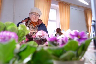 Колекціонери привезли до Чернівців 600 видів фіалок (ФОТО)