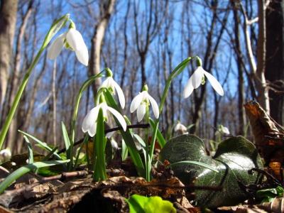 На Буковину нарешті йде справжня весна