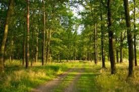 Буковинці виступили проти приватизації лісогосподарств