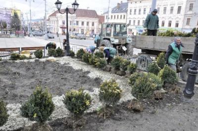 У Чернівцях на зелені насадження виділили 3 млн 880 тисяч гривень