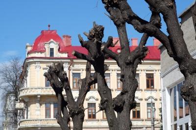 У Чернівцях дерева обрізають для омолодження