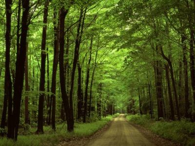 На Буковині тривають весняні лісокультурні роботи