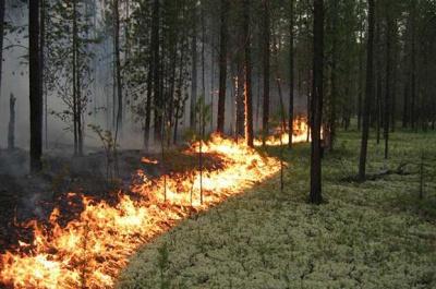Через пожежі в Забайкаллі вже палає Монголія