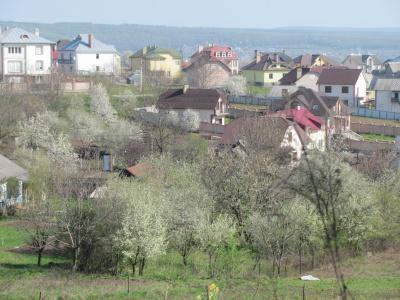 У Чернівцях розпочалося масове цвітіння дерев (ФОТО)