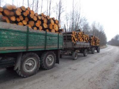 На Буковині лісники замовили перевезень на 7 мільйонів - протоколів немає