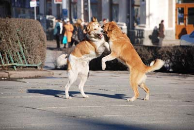 У Чернівцях дозволять встановлювати опіку над безпритульними тваринами