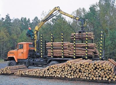 """На Буковині лісівники """"сплавили"""" 7 мільйонів оточенню нардепа з БПП"""