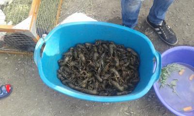 Рибоохорона Буковини на водосховищі затримала чергового браконьєра