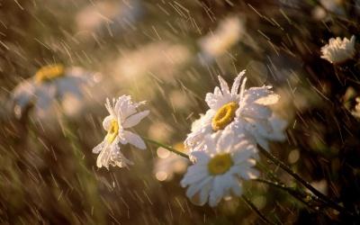 У вихідні на Буковині буде хмарно і дощитиме