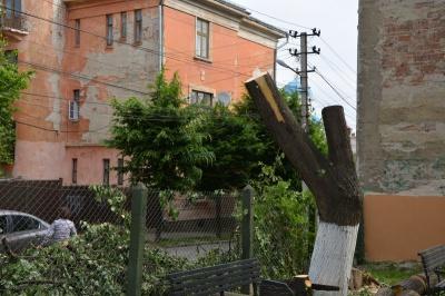 На місці обрізаного дерева комунальники обіцяють висадити нові