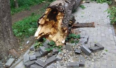 Через негоду в Чернівцях дерево впало на бігову доріжку в парку (ФОТО)