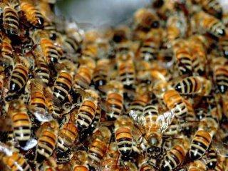 На Буковині впіймали двох юнаків, які викрали вулик з бджолами