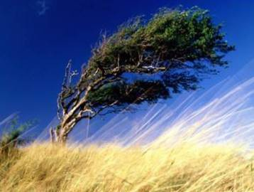 У вихідні у Чернівцях буде сухо і вітряно
