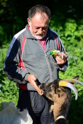 Черновчанин выпасает в центре города козу с желто-голубыми рогами (ФОТО)