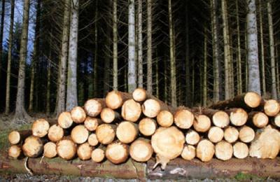 Лісгоспи реалізовуватимуть деревину через аукціон у Чернівцях