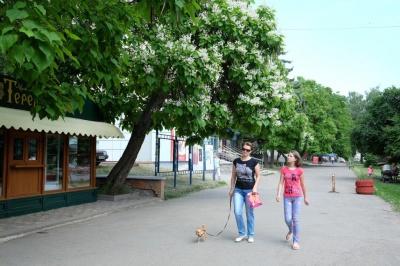 На проспекті зацвіли катальпи (ФОТО)