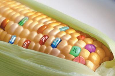 Наслідки вживання ГМО продуктів