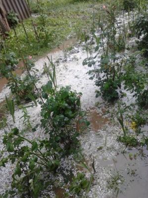 У селі на Буковині падав град завбільшки з лісовий горіх (ФОТО)