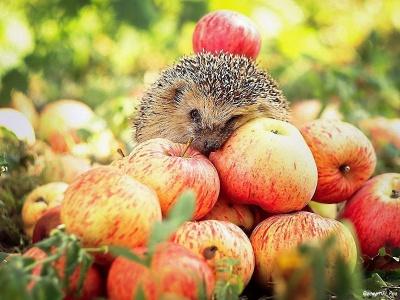 Які фрукти роблять нас щасливими