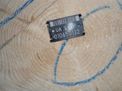 Лісгосп продав на аукціоні 10 тисяч кубометрів деревини