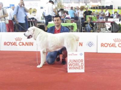 Собака з Чернівців став чемпіоном світу